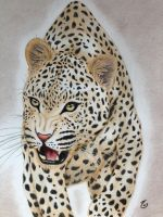 Leopard by rudy321