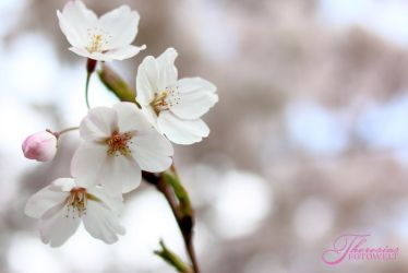 Blossomtime by RacyCracy