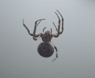 Spider 1 by Archangelical-Stock