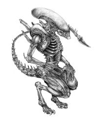 Xenomorph by Christopher-Manuel