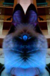 he he cyclops kitty by pickledshoe