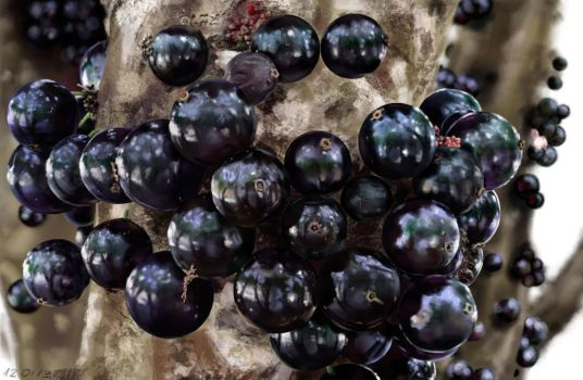 Jabuticaba Final by domcabral