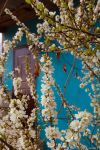 door in bloom by Ketka