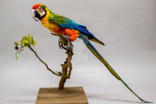Needle Felted Harlequin Macaw, Lifesize by FeatheredFauna