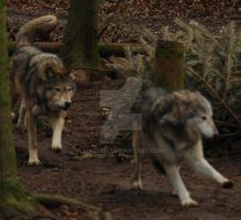 The Chase. by Mazurr