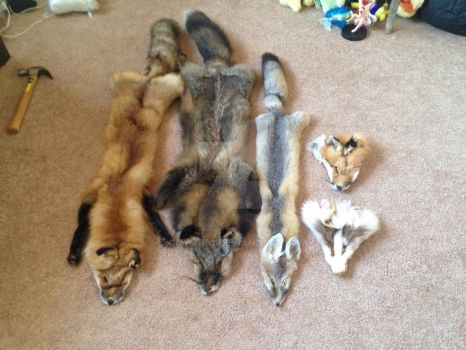 Pelts and Faces