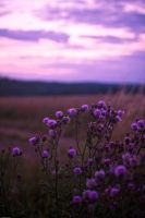 Purple Hour by allym007