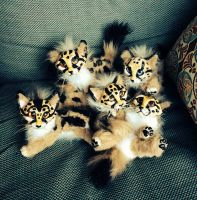 Cheetah Cubs Posable Art Dolls by Eviecats