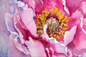 Peony by Shelter85