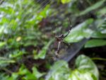 Quiet Spider by Guadisaves02
