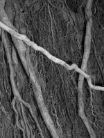 roots by disentropicobject23