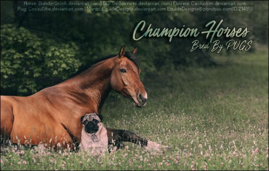 PUGS Horse Pic by EquideDesigns