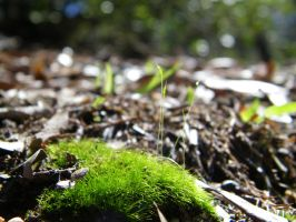 some macro moss by gravedesires777