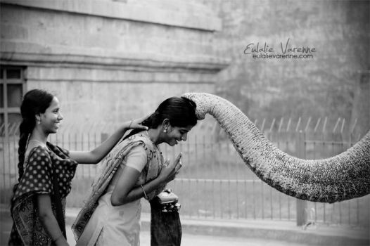 Elephant Blessing by eulalievarenne