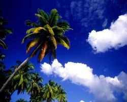 afternoon palm by jenaber