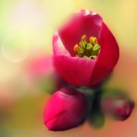 Spring dreams... by hikingboots