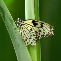 Butterfly 20 bis by Mely09