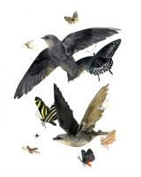 Chimney Swifts With Food Source and Butterflies by footinadream