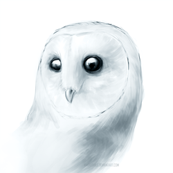 Barn owl - Practice thingy by Ankredible