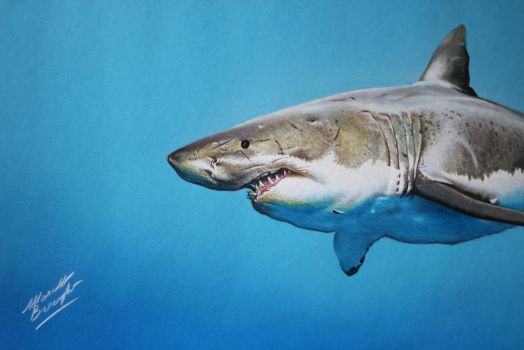 Cute shark on blue paper DRAWING Marcello Barenghi by marcellobarenghi