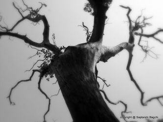 Soul of a tree by softhunterdevil