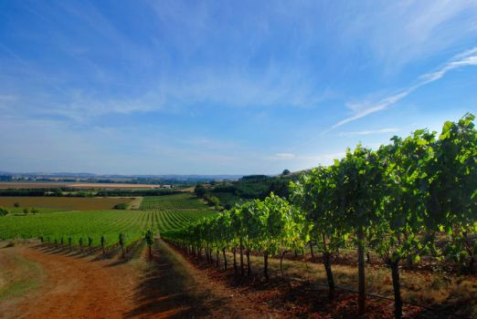 Wine Country. II by GreyLynx