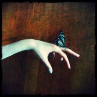 Butterfly on my hand by miobitat