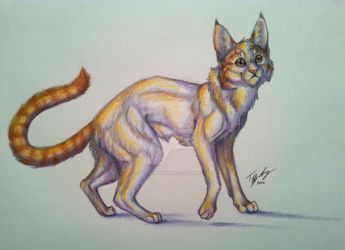 Inquisitive Copperpaw by CaptainMorwen
