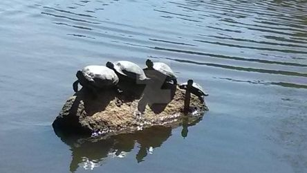 Turtles are Everywhere Lately... by TheSorceressRaven
