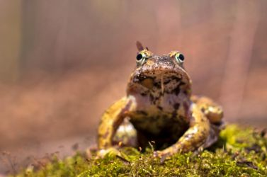 Little frog by maariusz