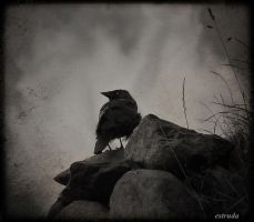 The Raven Looks Out by Estruda