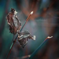 Dark Autumn. by OliviaMichalski