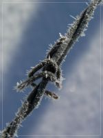 IceWire by glasswillow