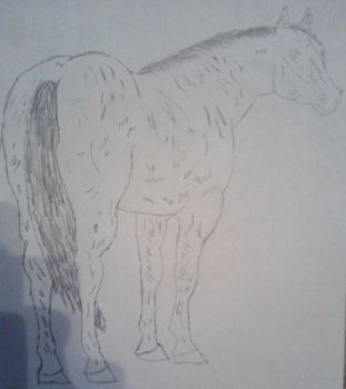 3rd drawn horse by jdg07