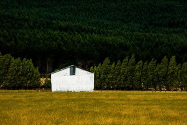 Green ,yellow-ish and a touch of white by lomatic