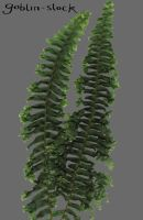 Fern_3_cutout by GoblinStock