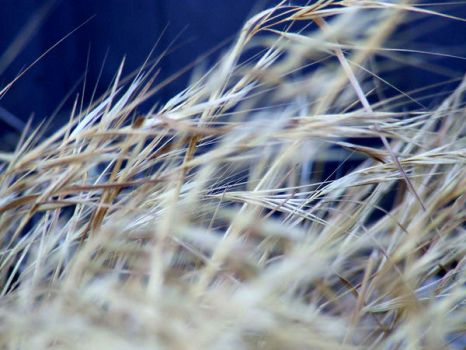 dries out long grass by kirstysphotography