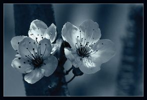 bloom by bsq2phat