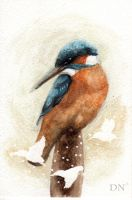 Kingfisher by Daphneven
