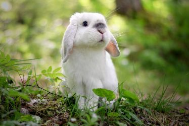 Bunny in the Forest by Exempeel