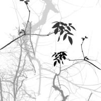 Branches brush by goodiebagstock
