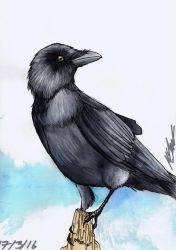 Crow by StudiousOctopus
