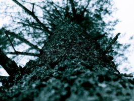 Large Tree by filmmaster123