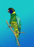 Port Lincoln Parrot by Imva