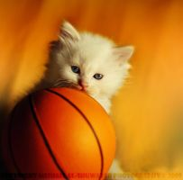 Want To Play Basketball by MeSHa3eL