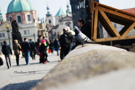 Pigeon in the city by PhotoLaura