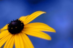 Blue and Yellow II by sharq