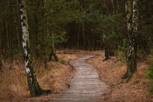 On the Right Path by aw-landscapes