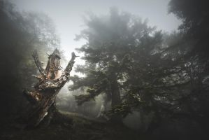 Guardian of Mist by Onodrim-Photography