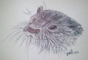 Loutre by LoiseFenollCreation